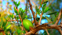 March Featured Product: Amazing Argan Oil