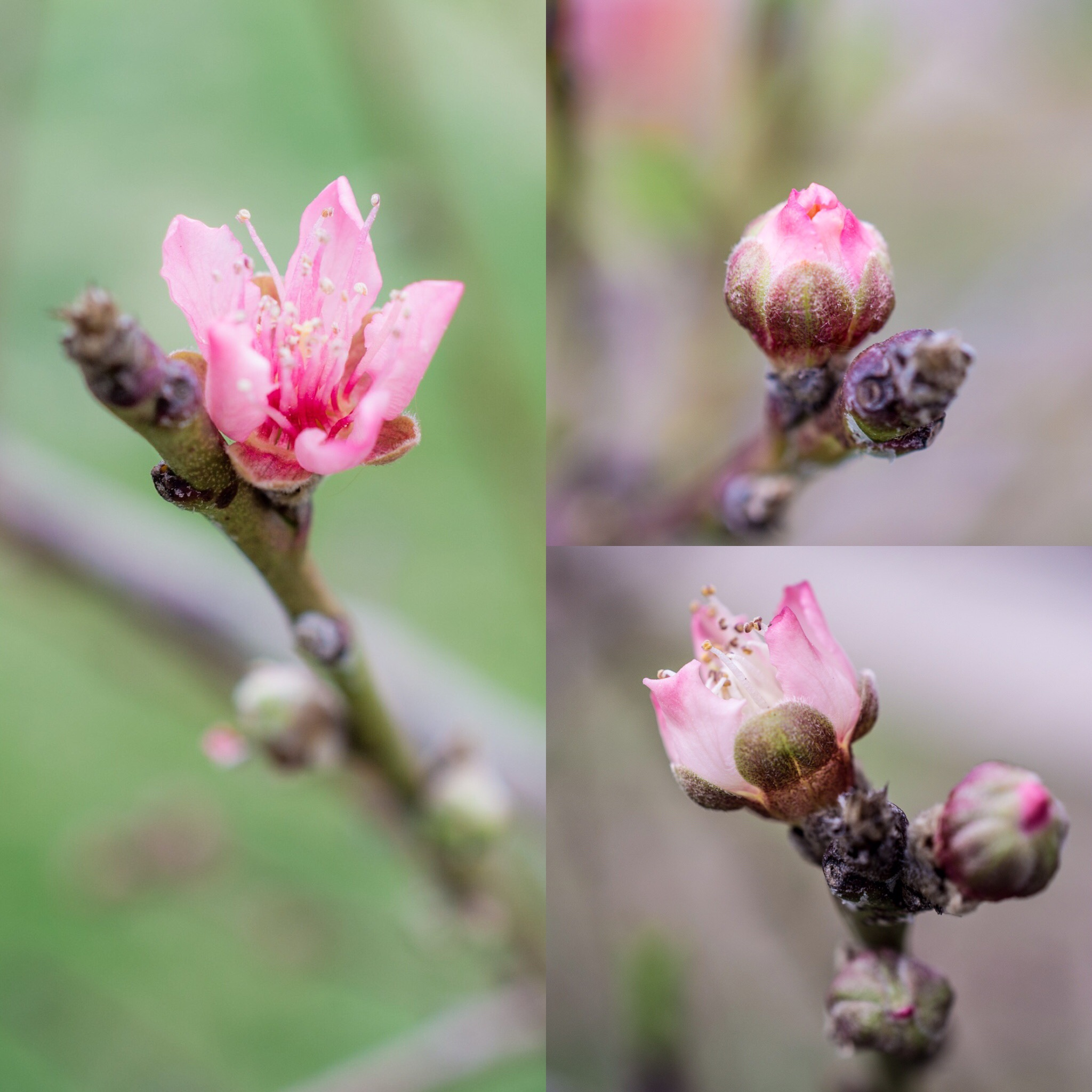 ren zatopek spiritwork essays poetry visions folk magic lesson peaches pregnancy and poetry