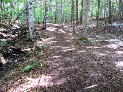 Trail to Falls