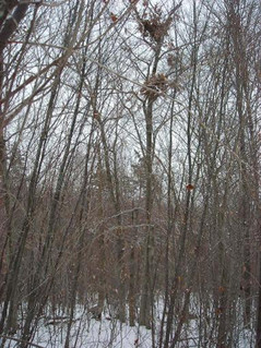 Bears Nests