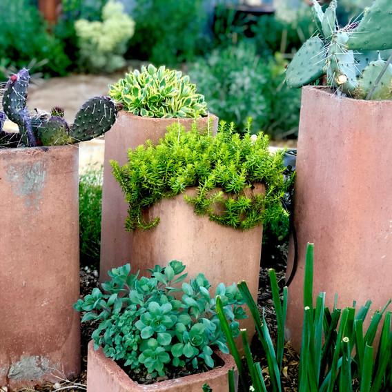 Chimney Plants.jpg