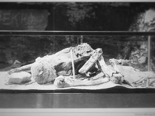 A Kentucky Mummy