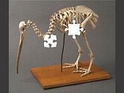 puzzle-kiwi-tepapa-800x600.jpg