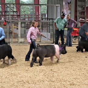 Livestock & Horse Show