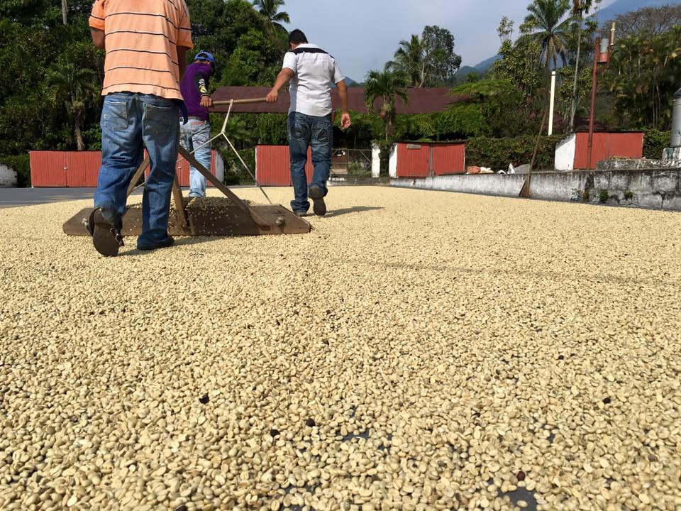 Guided Coffee Plantation Tour