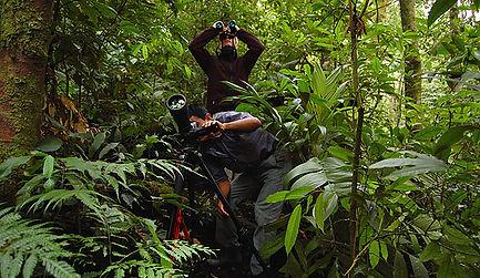 Guatmala Birding