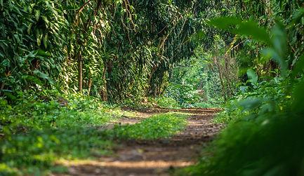 Guatemala Nature Trail