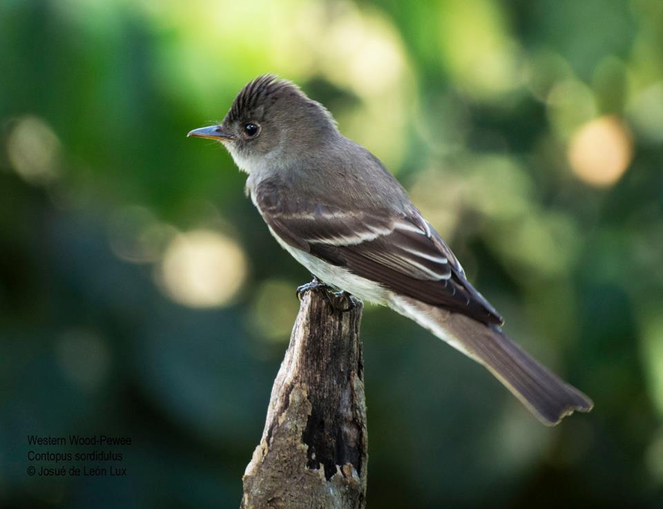Half-Day Guided Birding Tour