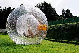 big ball, water roller, játék, bérlés, water ball, waterball