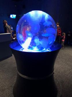 Aquarium Jelly Sphere