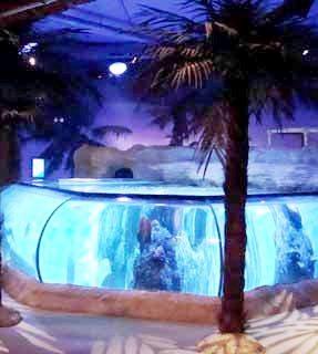 SLC Ray Tank AZ.jpg