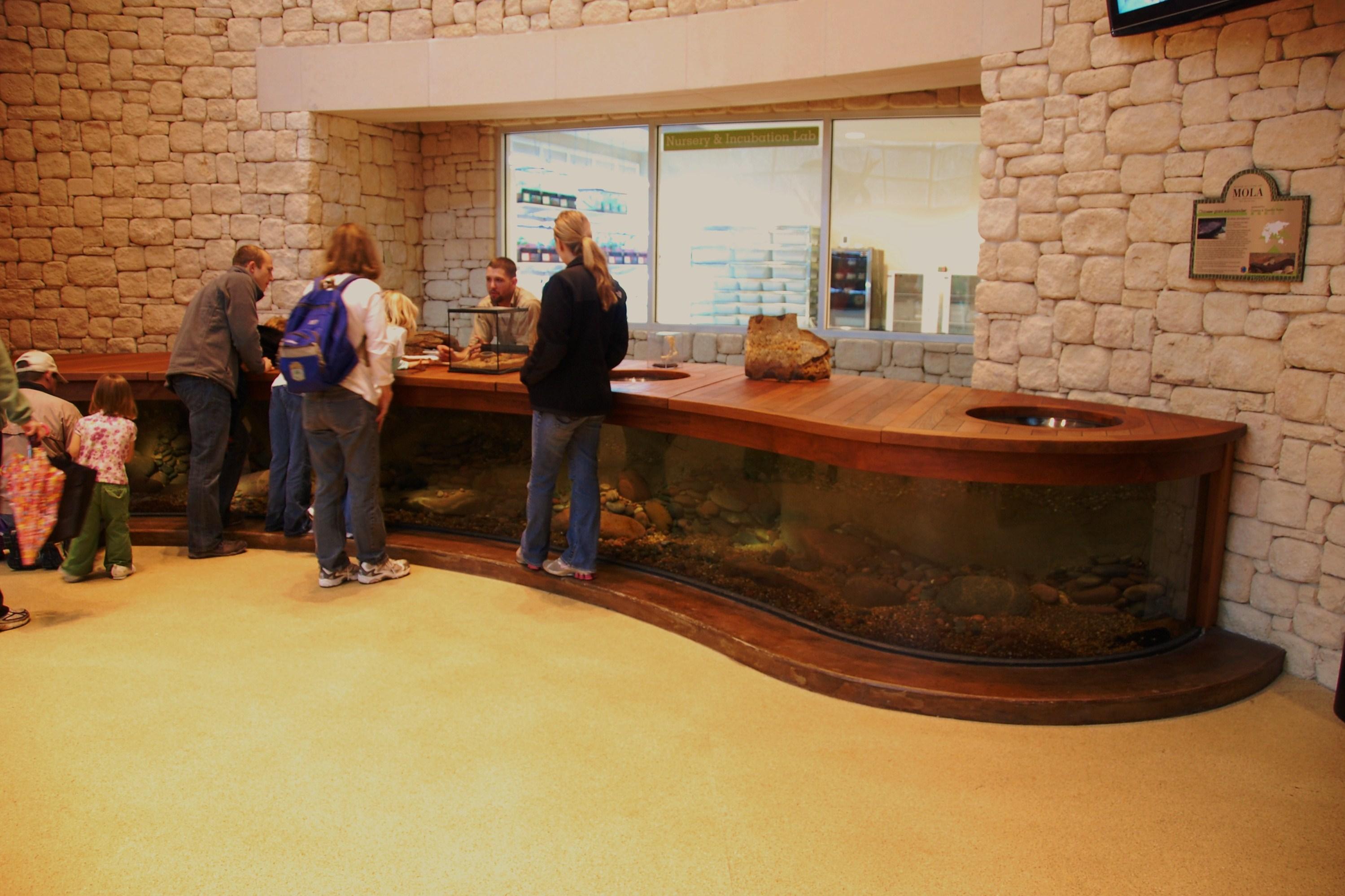 Giant Salamander Exhibit 1