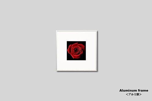 インテリア,写真,花,バラ,赤い花,インテリアフォト,正方形,アート,額入り,額装,オリジナルプリント,アートフレーム,フォトフレーム,おしゃれ,モダン,壁掛け,壁飾り,装飾