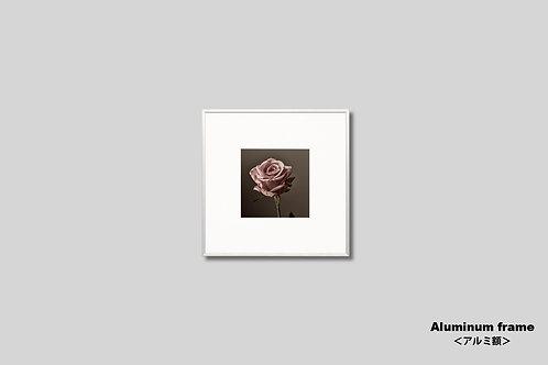 壁掛け,アート,額入り,写真,インテリア,花,バラ,枯れた花,正方形,フラワー,インテリアフォト,額装,オリジナルプリント,アートフレーム,フォトフレーム,おしゃれ,モダン,壁飾り,装飾