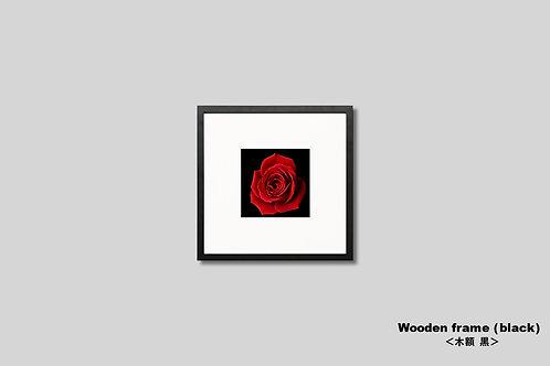 バラ,写真,壁掛け,アート,額装,インテリア,花,赤い花,インテリアフォト,正方形,額入り,オリジナルプリント,アートフレーム,フォトフレーム,おしゃれ,モダン,壁飾り,装飾