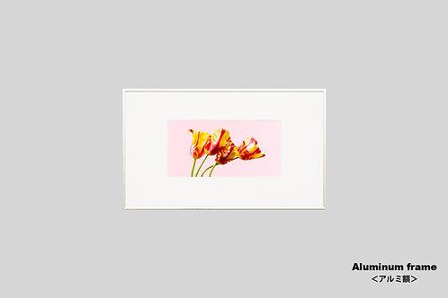花の写真,チューリップ,インテリア,かわいい,ピンク,新築祝い.プレゼント,フラワー,インテリアフォト,アート,額入り,額装,オリジナルプリント,アートフレーム,フォトフレーム,おしゃれ,モダン,壁掛け,壁飾り,装飾