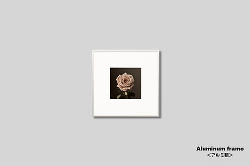 アーティスティック,インテリア,写真,花,枯れた花,バラ,正方形,フラワー,インテリアフォト,額入り,額装,アートポスター,ウォールアート,おしゃれ,モダン,壁掛け,壁飾り,装飾