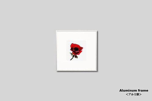 インテリア,写真,花,フラワー,インテリアフォト,アート,正方形,額入り,額装,オリジナルプリント,アートフレーム,フォトフレーム,おしゃれ,モダン,壁掛け,壁飾り,装飾,アネモネ,赤い花