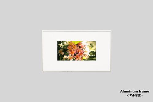 インテリア,写真,花,フラワー,ハワイ,トロピカル,インテリアフォト,アート,額入り,額装,オリジナルプリント,アートフレーム,フォトフレーム,おしゃれ,モダン,壁掛け,壁飾り,装飾,プルメリア
