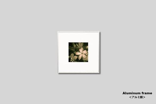 写真,花,インテリア,フラワー,ハワイ,プルメリア,インテリアフォト,正方形,オールドハワイアン,額入り,額装,新築祝い,プレゼント,アートフレーム,フォトフレーム,おしゃれ,モダン,壁掛け,壁飾り,装飾