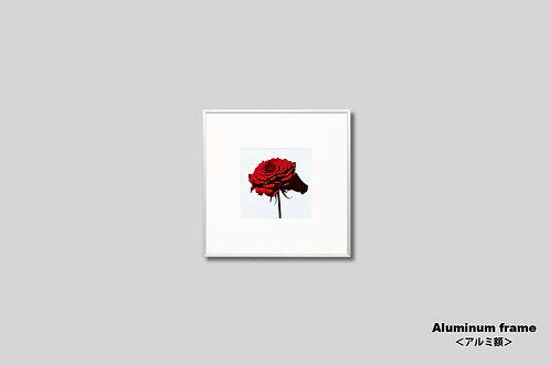 インテリア,写真,花,バラ,赤い花,フラワー,インテリアフォト,正方形,アート,額入り,額装,オリジナルプリント,アートフレーム,フォトフレーム,おしゃれ,モダン,壁掛け,壁飾り,装飾