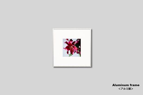 インテリア,写真,花,フラワー,インテリアフォト,アート,正方形,額入り,額装,オリジナルプリント,アートフレーム,フォトフレーム,おしゃれ,モダン,壁掛け,壁飾り,装飾,ユリ,ゆり