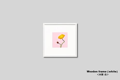 インテリア,写真,花,ポピー,ピンク,かわいい,フラワー,インテリアフォト,アート,額入り,額装,オリジナルプリント,正方形,アートフレーム,フォトフレーム,おしゃれ,モダン,壁掛け,壁飾り,新築祝い