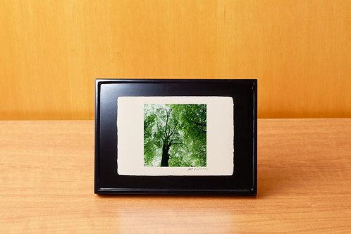 手漉き和紙,写真,風景,自然,木,インテリアフォト,おしゃれ,モダン,アートフレーム,卓上額,置き型,装飾,オリジナルプリント,フォトフレーム,プレゼント,ギフト