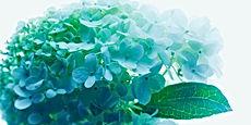 花の写真:ヒマワリ バラ チューリップ アジサイ カラー インテリアフォト 額入り 壁掛け アート 額装 手漉き和紙 オリジナルプリント
