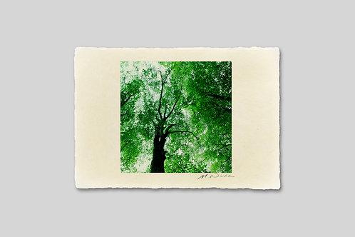 手漉き和紙,写真,風景,木,森,インテリアフォト,卓上サイズ,アートフレーム,おしゃれ,モダン,部屋飾り,装飾,オリジナルプリント,プレゼント,ギフト