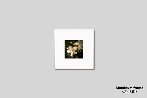 インテリア,写真,花,フラワー,オールドハワイアン,インテリアフォト,正方形,トロピカル,南国,アート,額入り,額装,オリジナルプリント,アートフレーム,フォトフレーム,新築祝い,プレゼント,おしゃれ,モダン,壁掛け,壁飾り