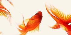 日本の風景写真:富士山 竹林 金魚 インテリアフォト 和モダン 手漉き和紙 アート 額入り 壁掛け 壁飾り 和室