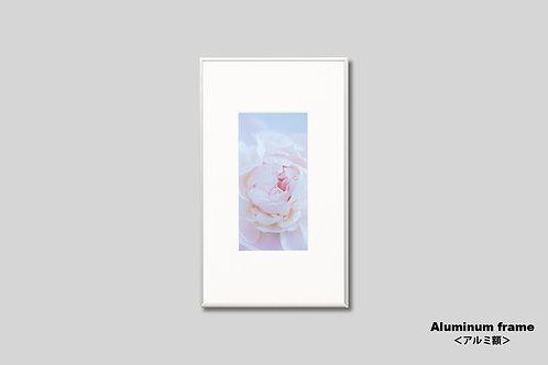 インテリア,写真,花,フラワー,インテリアフォト,アート,額入り,額装,オリジナルプリント,アートフレーム,フォトフレーム,おしゃれ,モダン,壁掛け,壁飾り,装飾,シャクヤク