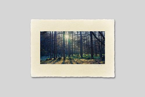 手漉き和紙,写真,風景,森,木,自然,インテリアフォト,アートフレーム,おしゃれ,モダン,卓上サイズ,部屋飾り,装飾,オリジナルプリント,フォトフレーム,プレゼント,ギフト