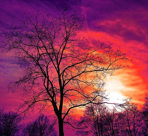 tree-3194803_1920_edited.jpg