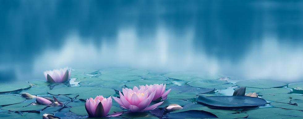 beautiful pink water lily flowers idyll