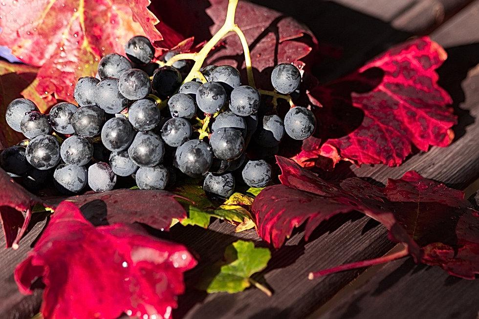 wine-1729460_1920.jpg
