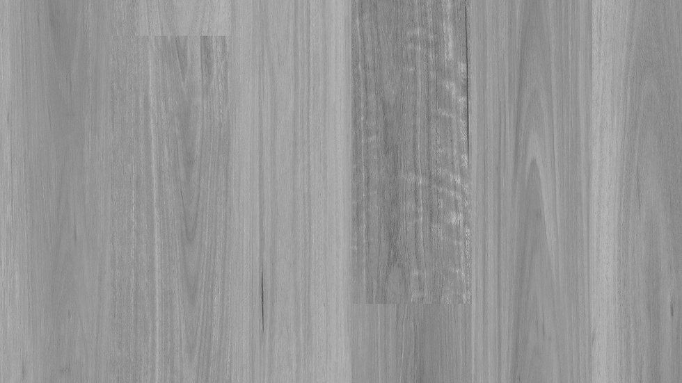 Grey Spotted Gum