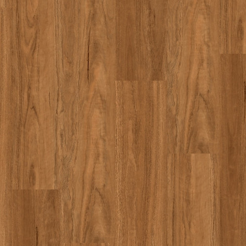 DLL 703 NORTHERN SPOTTED GUM