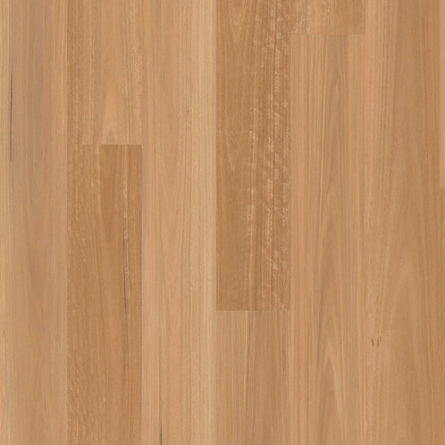 Golden Spotted Gum