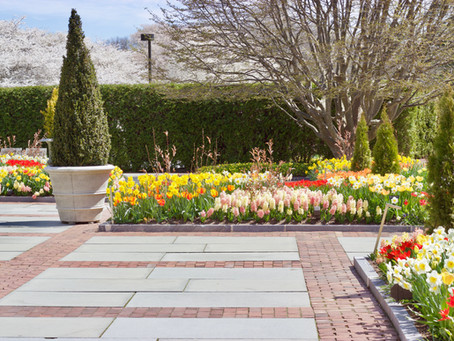 Spring Blooms at Longwood Gardens
