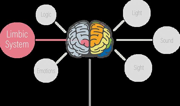 brain-branding.png