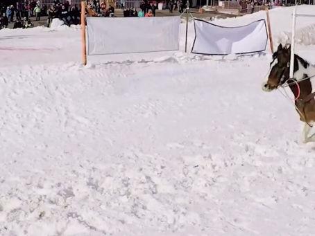 Extreme Horse Skijoring in Canterbury Park, Shakopee, Minnesota