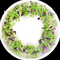 mix de micropousses dans une assiette bl