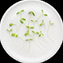 Jeunes pousses assiette blanche.png