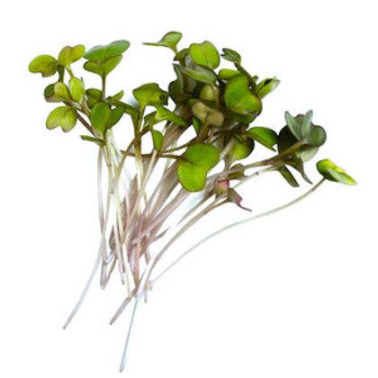 Micro-pousses de Broccoli Calabrais