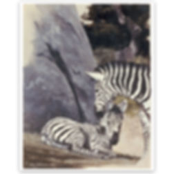 zebras1024.jpg