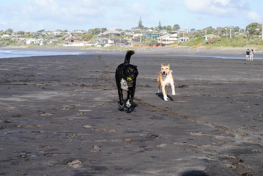 dog oakura beach