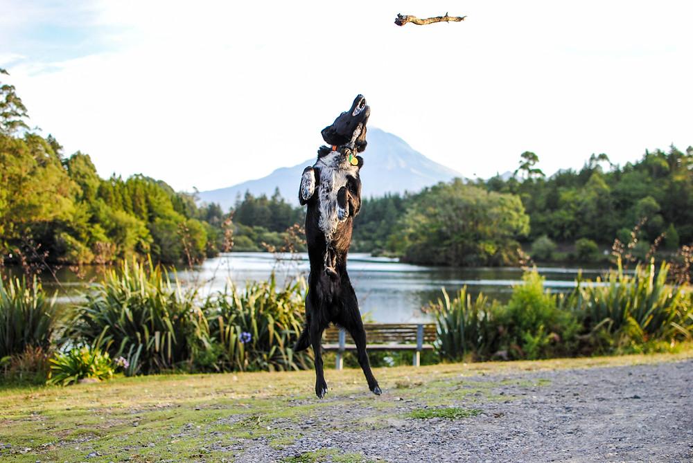 dog lake mangamahoe