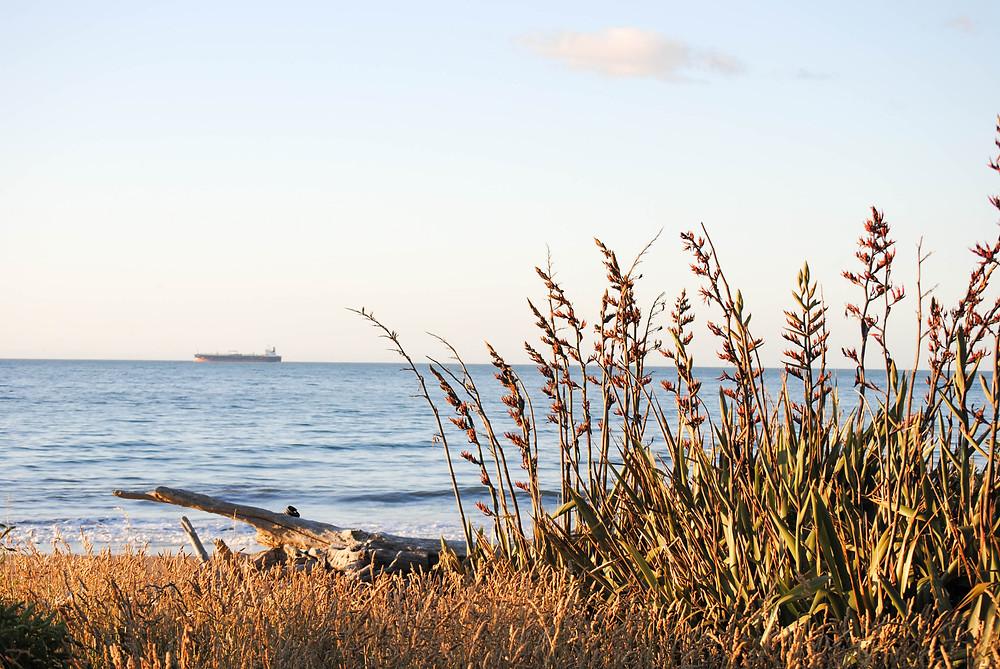 taranaki shore